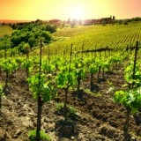 Chauffeured Wine Tour Package