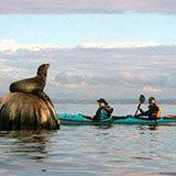 kayak-specials