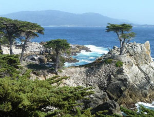 Scenic view from a hiking trail in Monterey, CA
