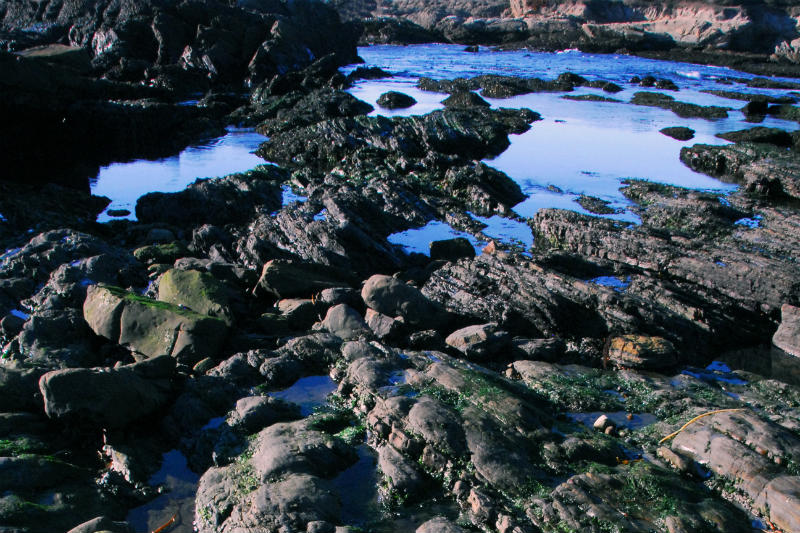 Point Lobos Tide Pools